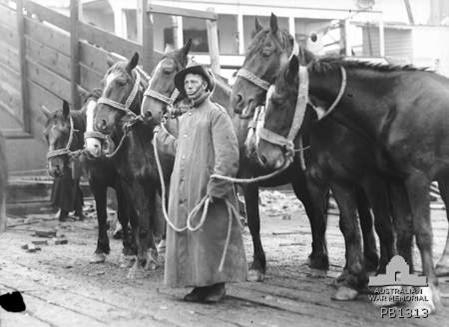 ANZAC War Horses